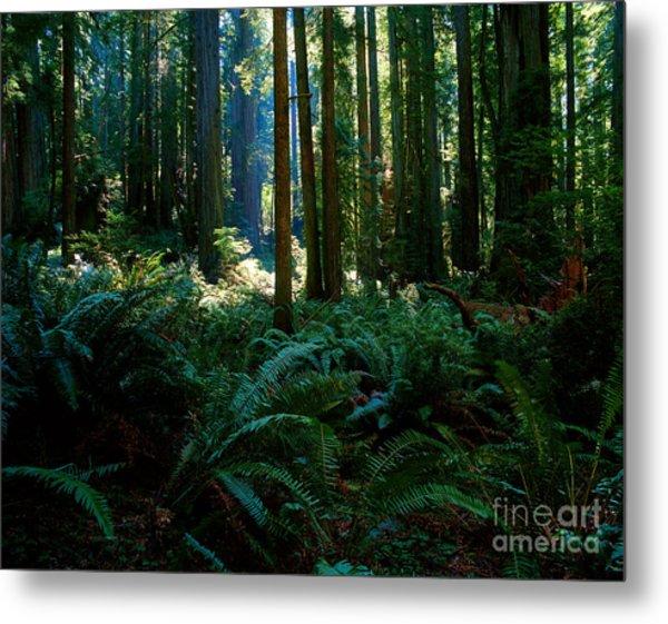 Prairie Creek Redwoods State Park 10 Metal Print
