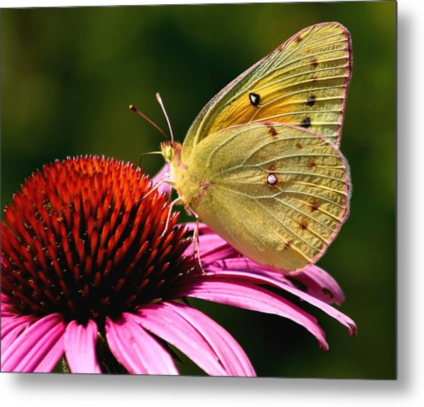 Pretty As A Butterfly Metal Print