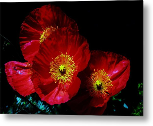 Pretty As A Poppy Metal Print