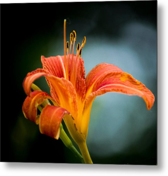 Pretty Flower Metal Print