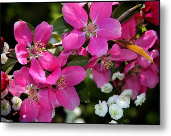 Pretty In Pink I Metal Print by Aya Murrells