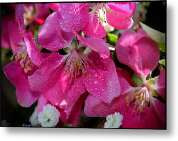 Pretty In Pink IIi Metal Print by Aya Murrells