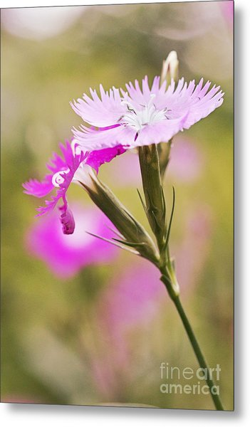 Pretty In Pink Metal Print by Pamela Gail Torres