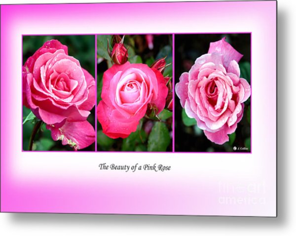 Pretty In Pink Roses Metal Print by Jo Collins