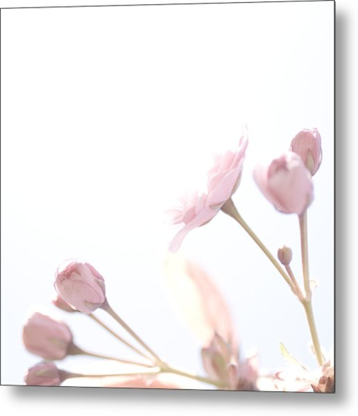 Pretty In Pink - The Dreamer Metal Print