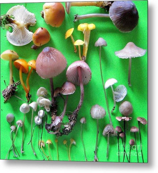 Pretty Little Mushrooms Metal Print