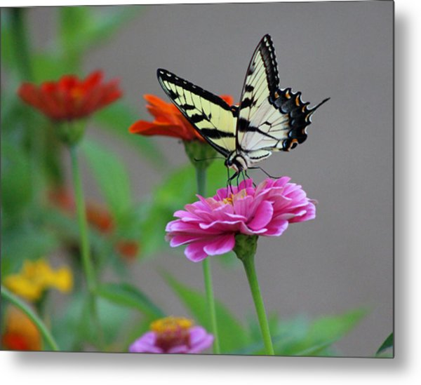 Pretty On Pink Metal Print