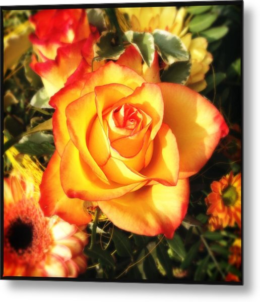 Pretty Orange Rose Metal Print