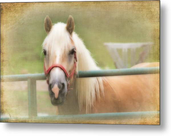 Pretty Palomino Horse Photography Metal Print