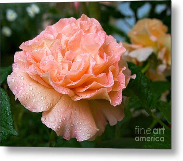 Pretty Peach Peony Flower Metal Print