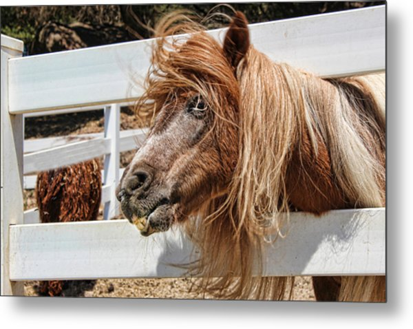 Pretty Pony After Metal Print