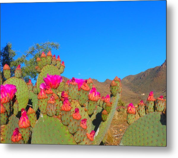 Prickly Pear Blooming Metal Print