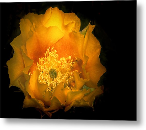 Prickly Pear Cactus Bloom Metal Print by Dean Ginther