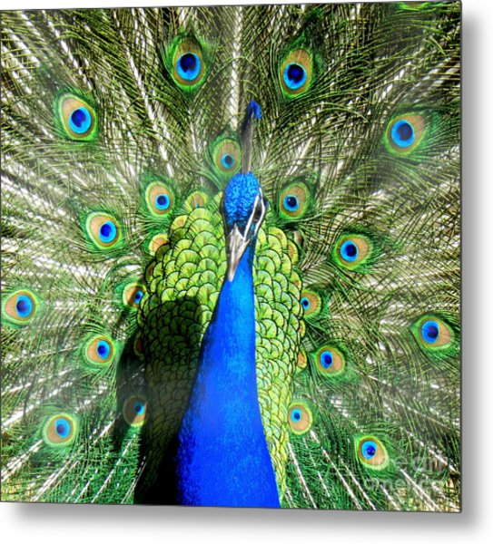 Pride Of India Metal Print