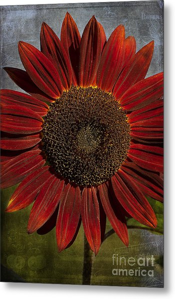 Primitive Sunflower 2 Metal Print