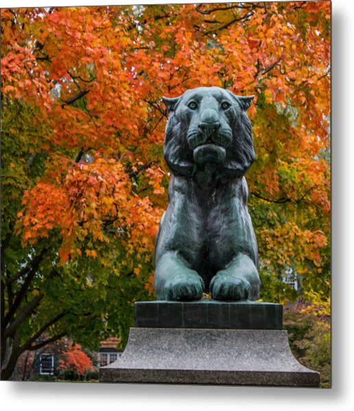 Princeton Tiger Metal Print