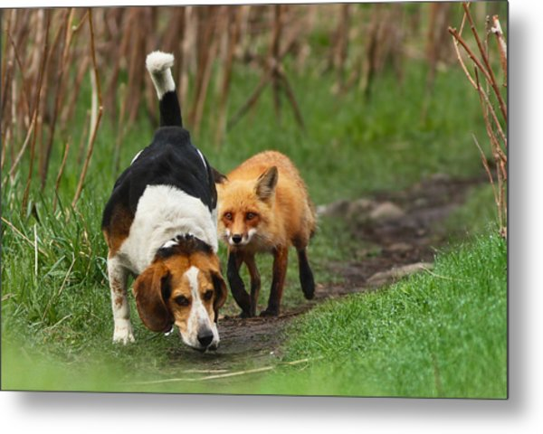 Probably The World's Worst Hunting Dog Metal Print
