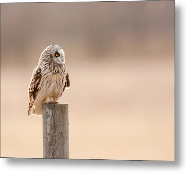 Profile Of A Short-eared Owl 1 Metal Print