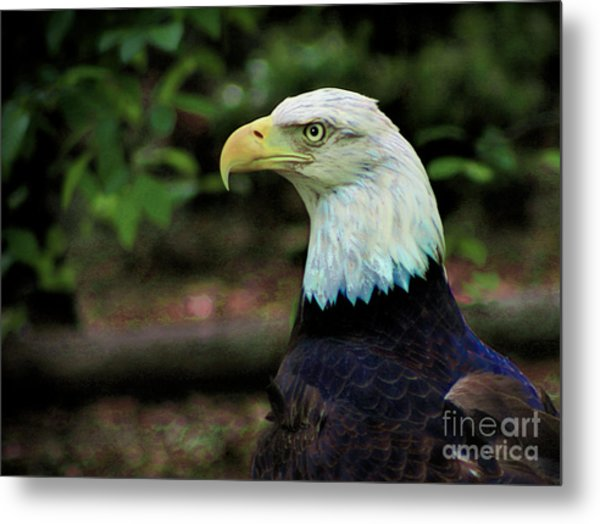 Profile Of America Metal Print