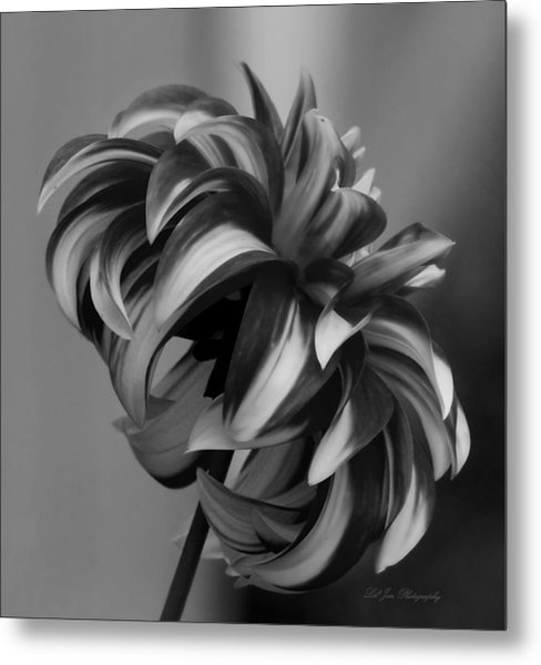 Profile Of Not Santa Two In Black And White Metal Print
