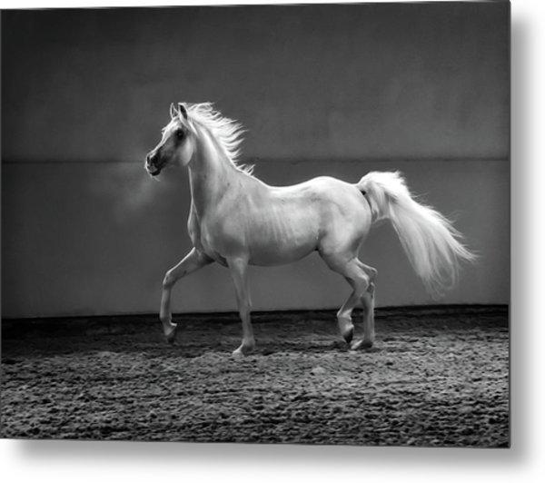 Proud Arabian Horse - Stallion In Metal Print by Kerrick