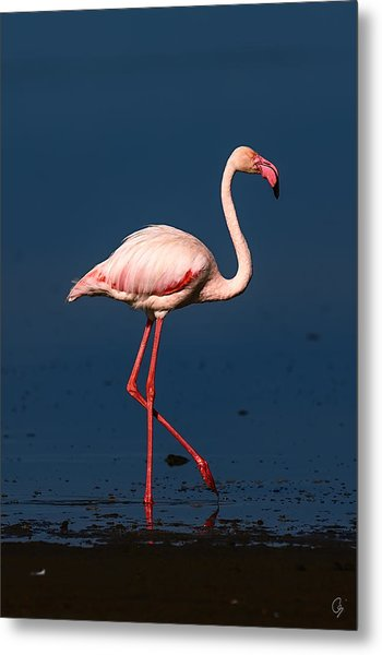 Proud Metal Print by Jeppsson Photography