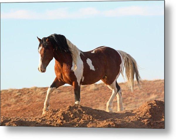 Proud Paint Mustang Metal Print