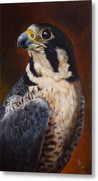 Proud - Peregrine Falcon Metal Print