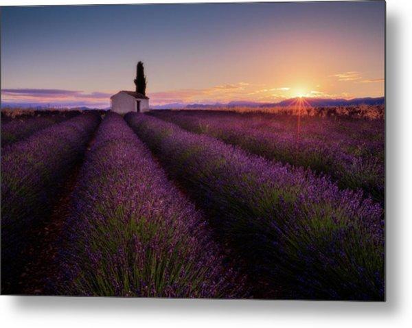 Provence Lavender Metal Print