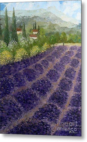 Provence Lavender Fields  Metal Print