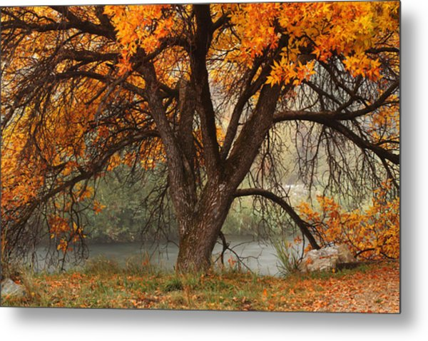 Provo Autumn #1 Metal Print