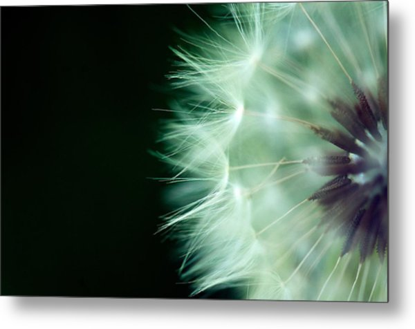 Puff Ball 1 Metal Print