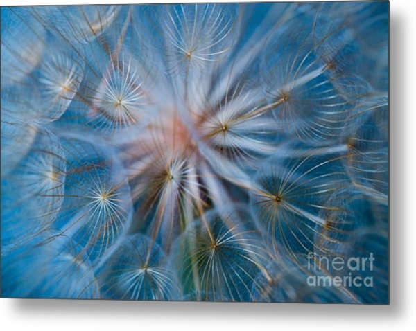 Puff-ball In Blue Metal Print