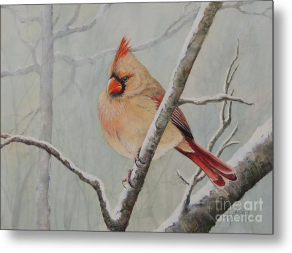 Puffed Up For Winters Wind Metal Print