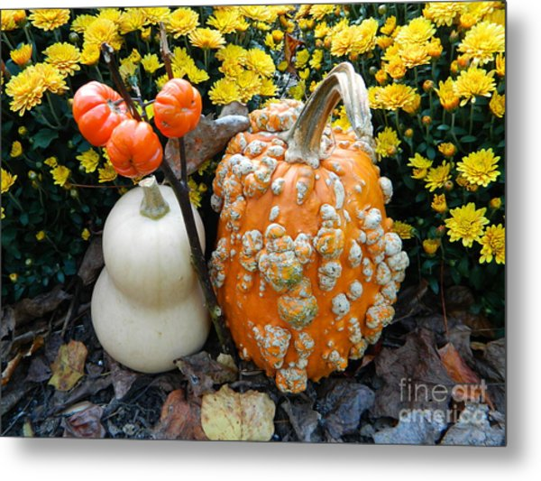 Pumpkin And Squash Metal Print