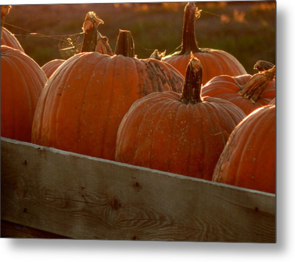Pumpkin Webbed Light Metal Print