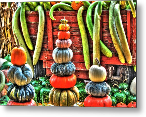 Pumpkins And Gourds Metal Print