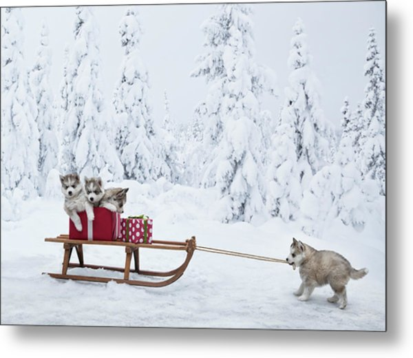 Puppies With A Sled Full Of Christmas Metal Print by Per Breiehagen