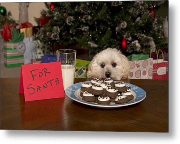 Puppy Checking Out Christmas Cookies Metal Print