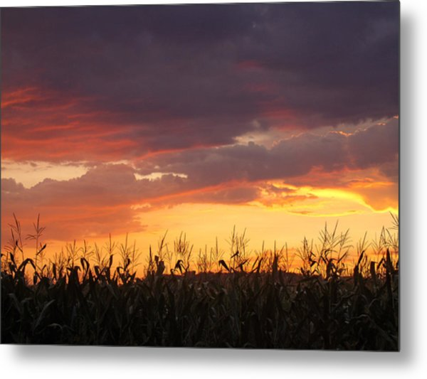 Purple And Maize Metal Print