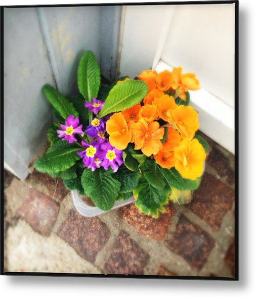 Purple And Orange Flowers Metal Print