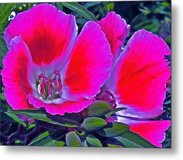 Purple And Red  Metal Print by Martin S Gold