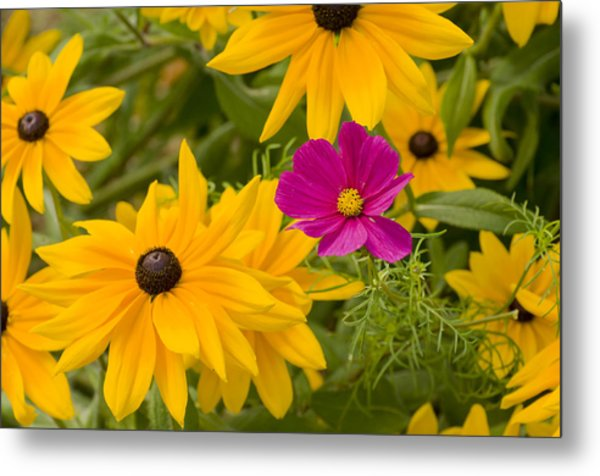 Purple And Yellow Flowers Metal Print