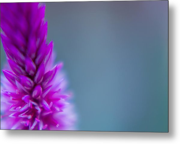 Purple Blur Metal Print