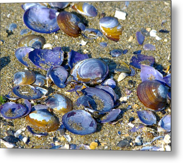Purple Clam Shells On A Beach Metal Print