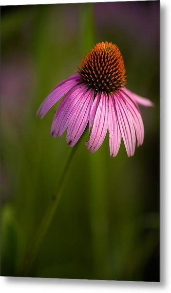 Purple Cone Flower Portrait Metal Print