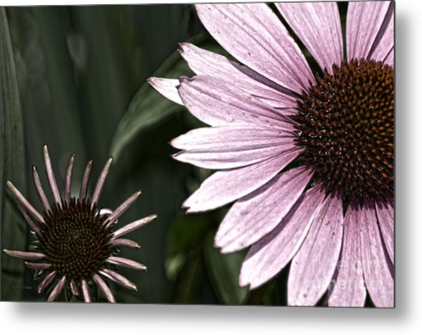 Purple Coneflower Imperfection Metal Print
