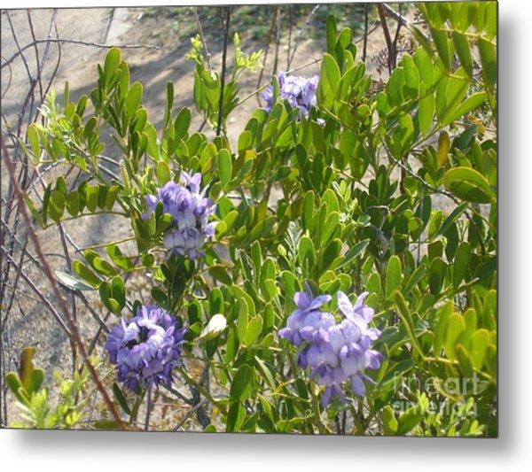 Purple Desert Flowers Metal Print