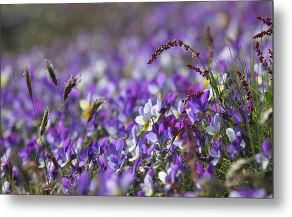 Purple Flower Bed Metal Print