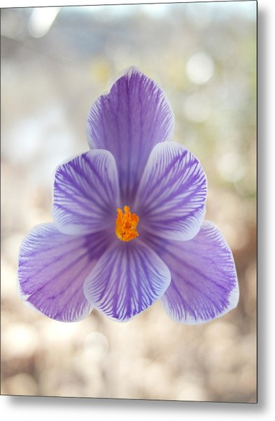 Purple flower with yellow stamen in central park photograph by purple flower with yellow stamen in central park metal print by robert englebright mightylinksfo